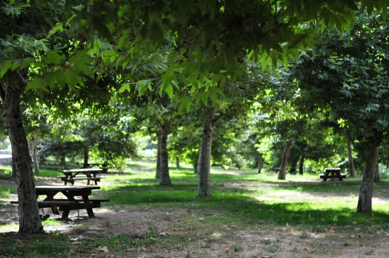 Orchard Picnic Tables