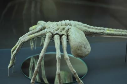 A Facehugger from Alien