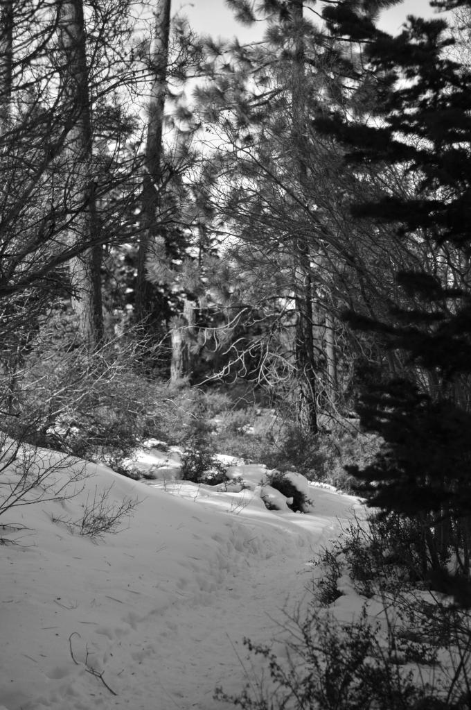 San Gorgonio Snow Hike