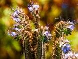 Blue Farm Flowers