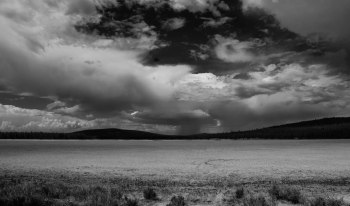 Lassen Forest Black and White