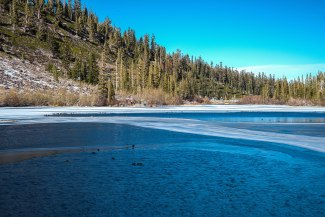 The ducks sitting on the partially frozen lake and ice, safe from heavier predators in Mammoth, CA.