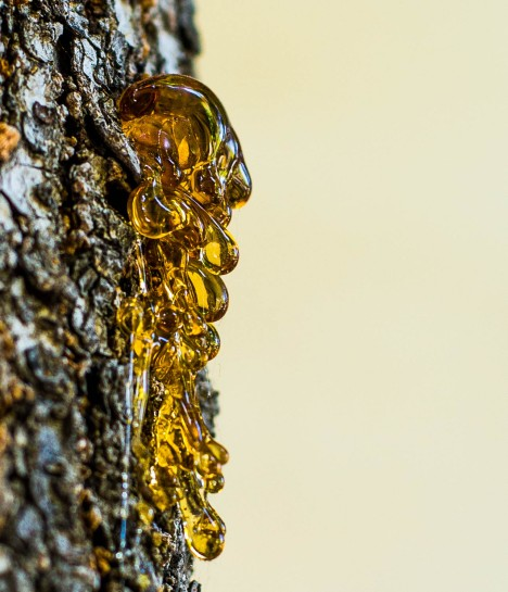 Waves of dried and shining tree sap.