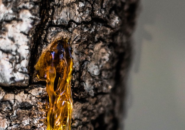 A cropped close-up of of the hole that the sap is coming from.