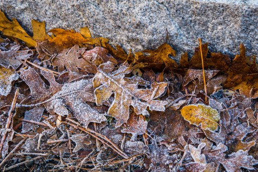 A pile of leaves on the side of the road that are covered in frost crystals.