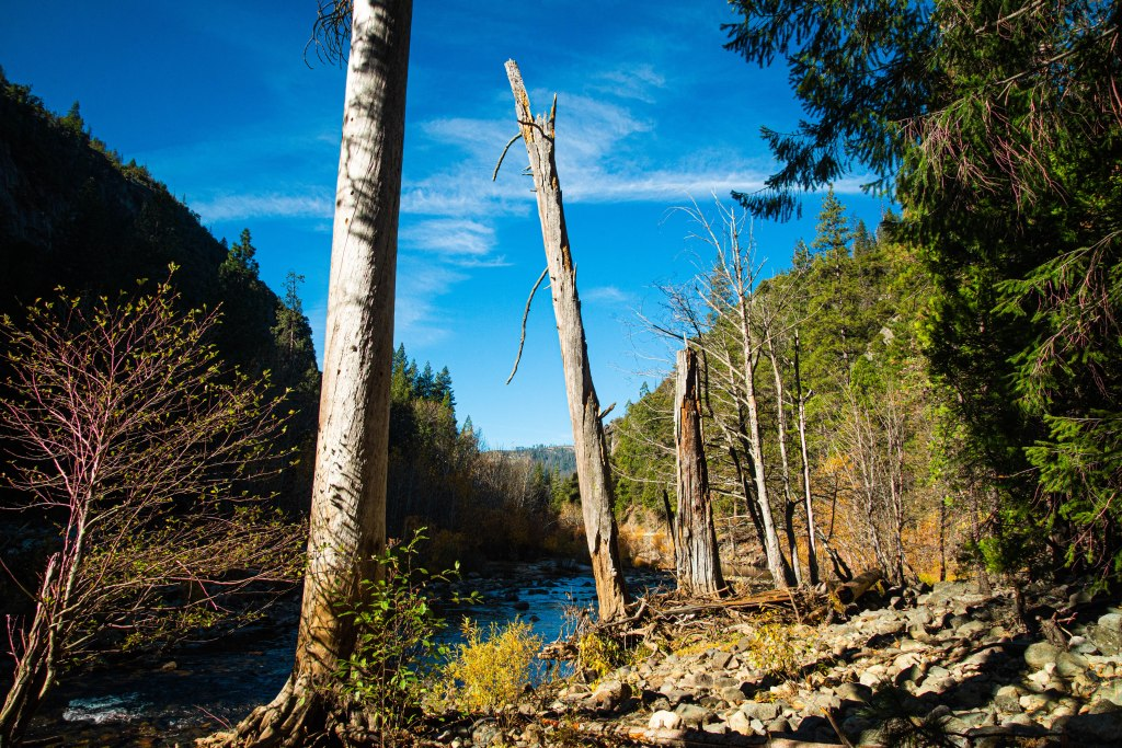 Merced River Trees