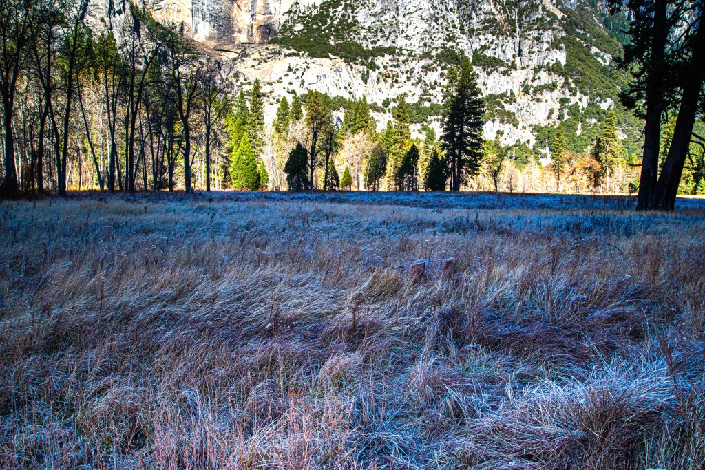 Stoneman Meadow Frost